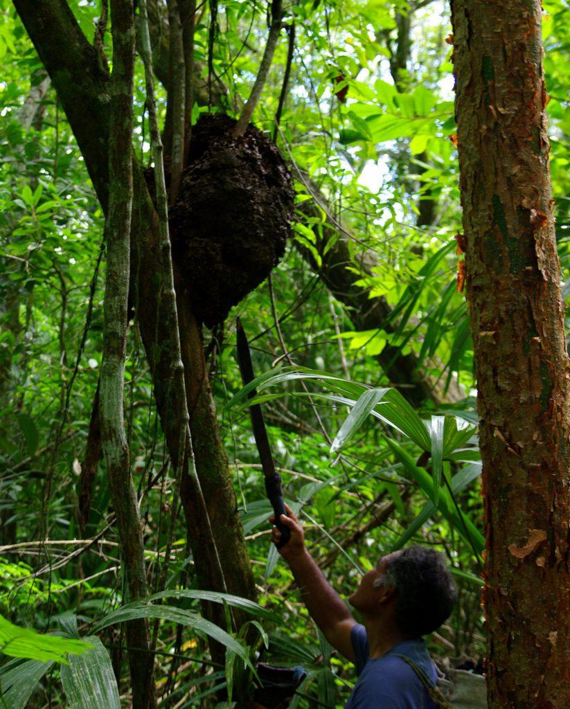 Bienenstock - Im Peten - Guatemala