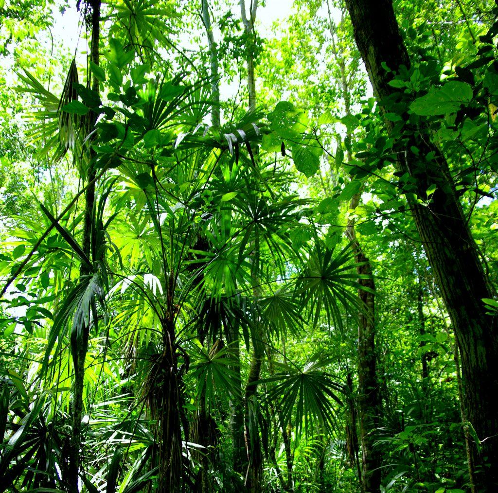 Dschungelimpression - Im Peten - Guatemala