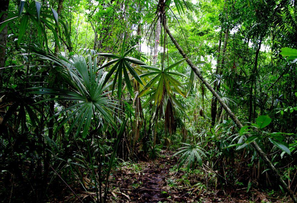 Maultierpfad - Im Peten - Guatemala