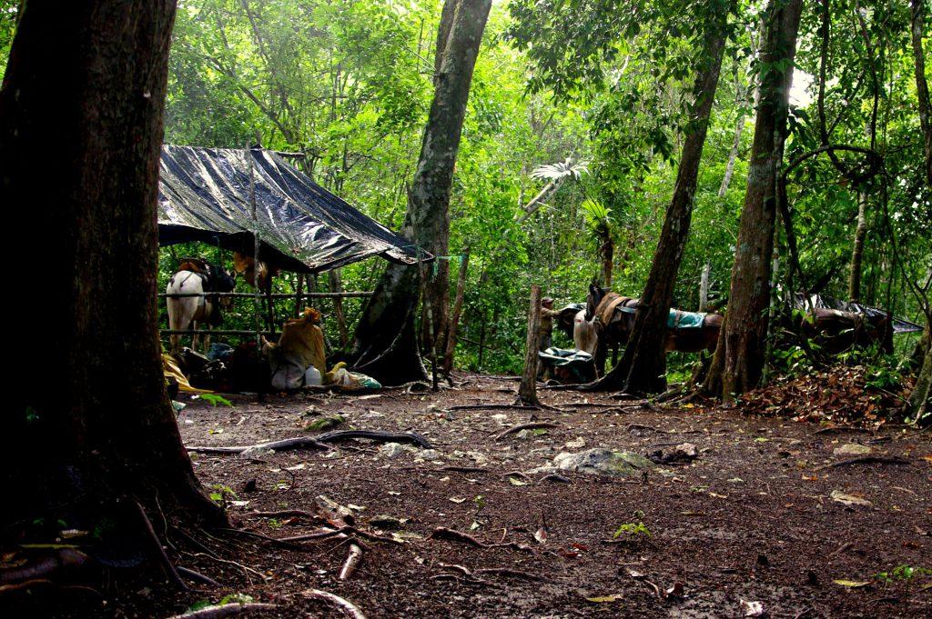 Lager - Dschungelimpression - Im Peten - Guatemala