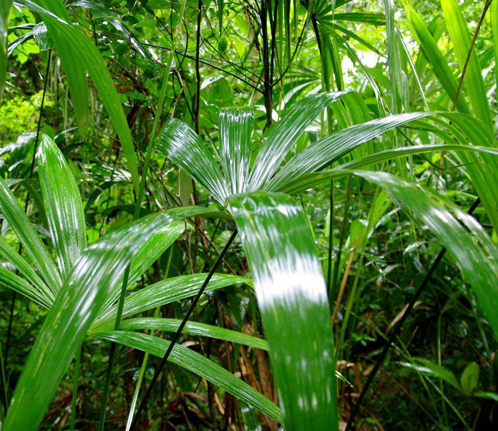 Nach dem Regen - Dschungelimpression - Im Peten - Guatemala