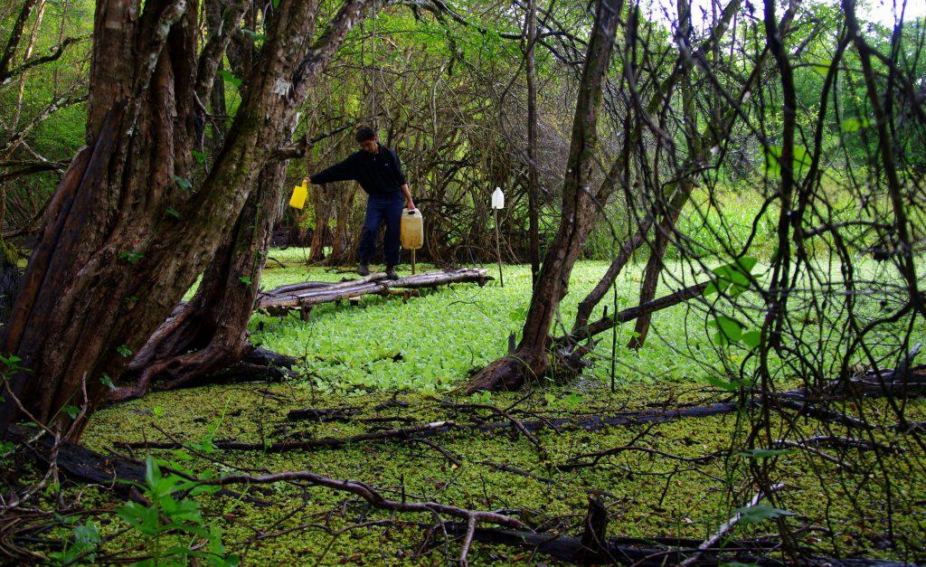 Wasserstelle - Dschungelimpression - Im Peten - Guatemala