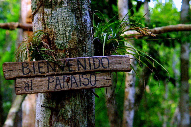 Willkommen im Paradies - Dschungelimpression - Im Peten - Guatemala