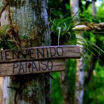 Im Peten - Guatemala - (2/2)