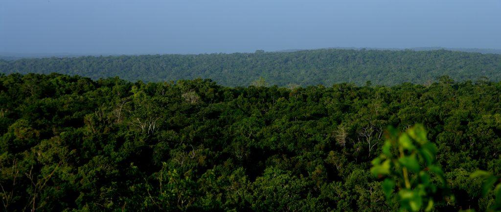 Blick über das Pflanzenmeer - Dschungelimpression - Im Peten - Guatemala