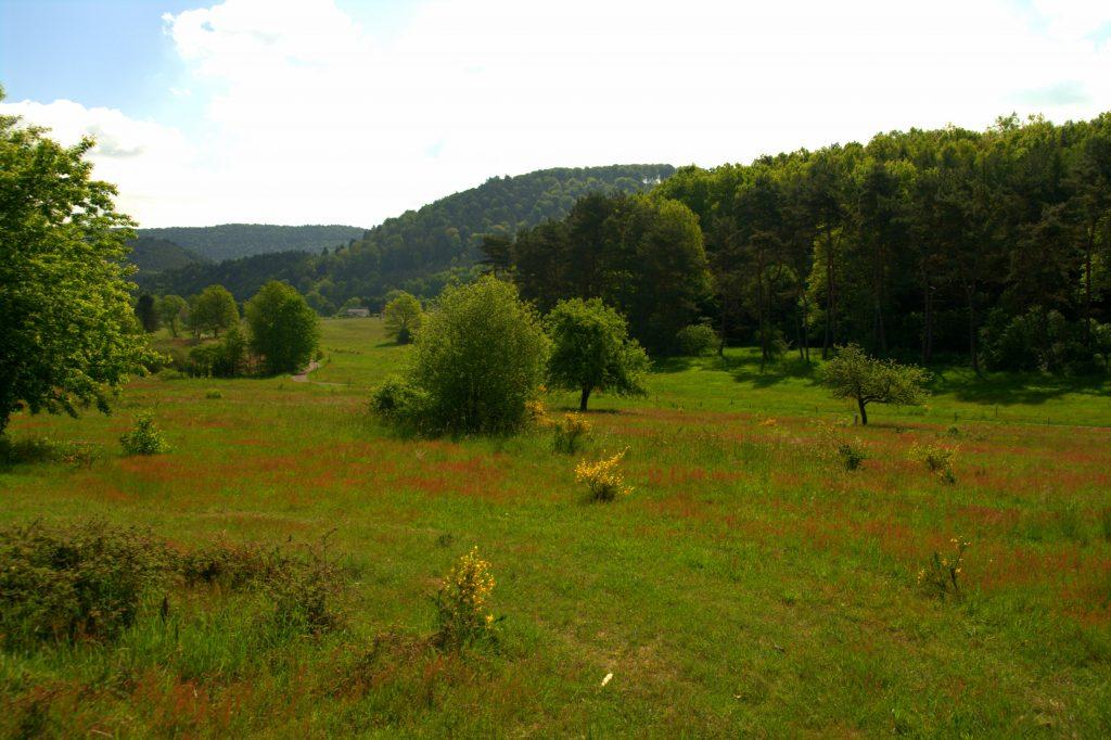 Blick zurück ins Tal - Am Saarbach entlang - Wasgauer Seenwanderung