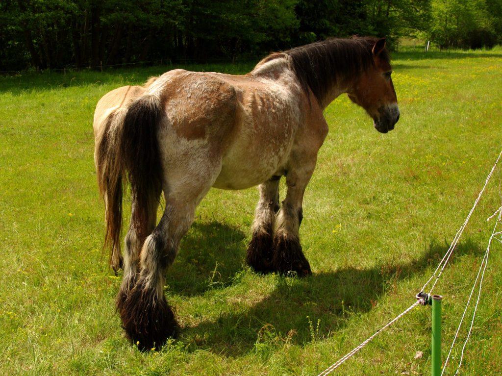 Pferde am Wegesrand - Wasgauer Seenwanderung