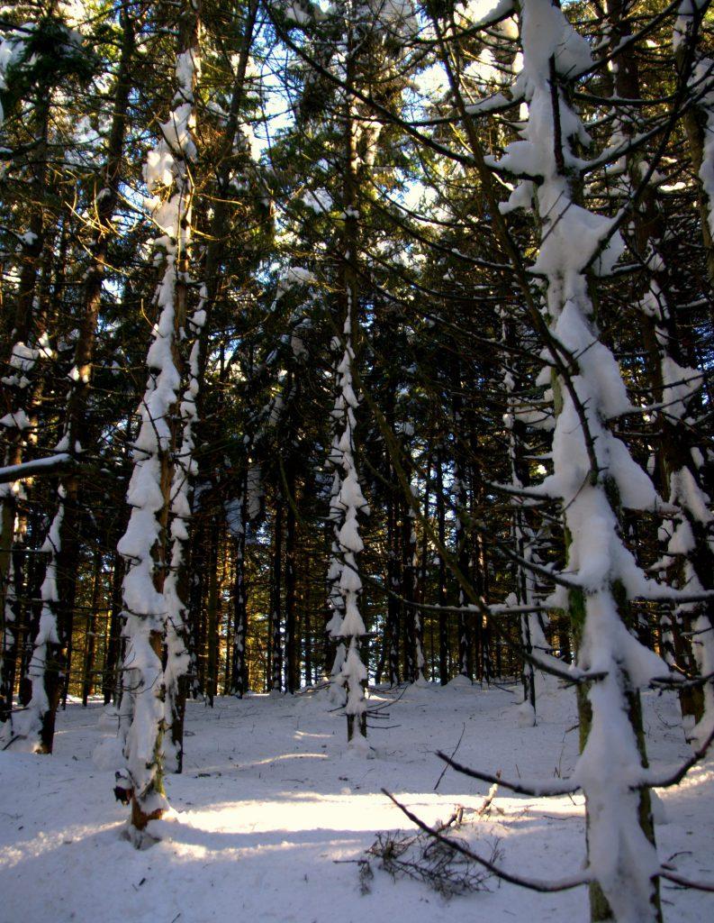 Schneeskulpturen an Bäumen