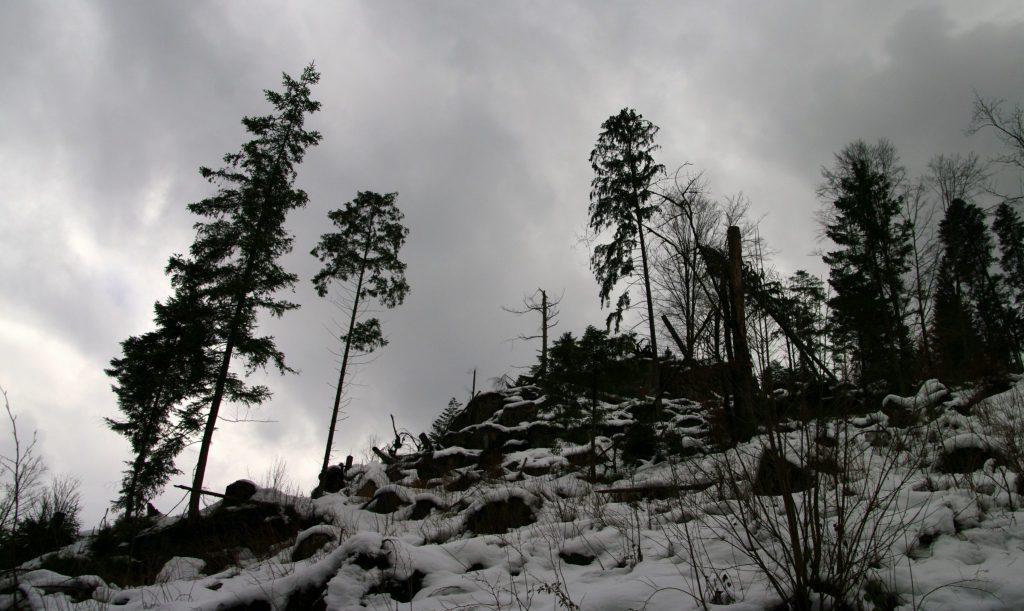 Winterlicher Schwarzwaldgipfel in der Nähe von Raumünzach im Schwarzwald