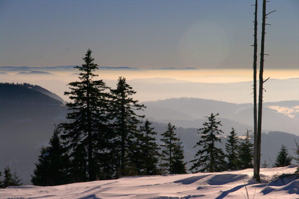 Blick in die Rheinebene - Hornisgrinde - Schwarzwald