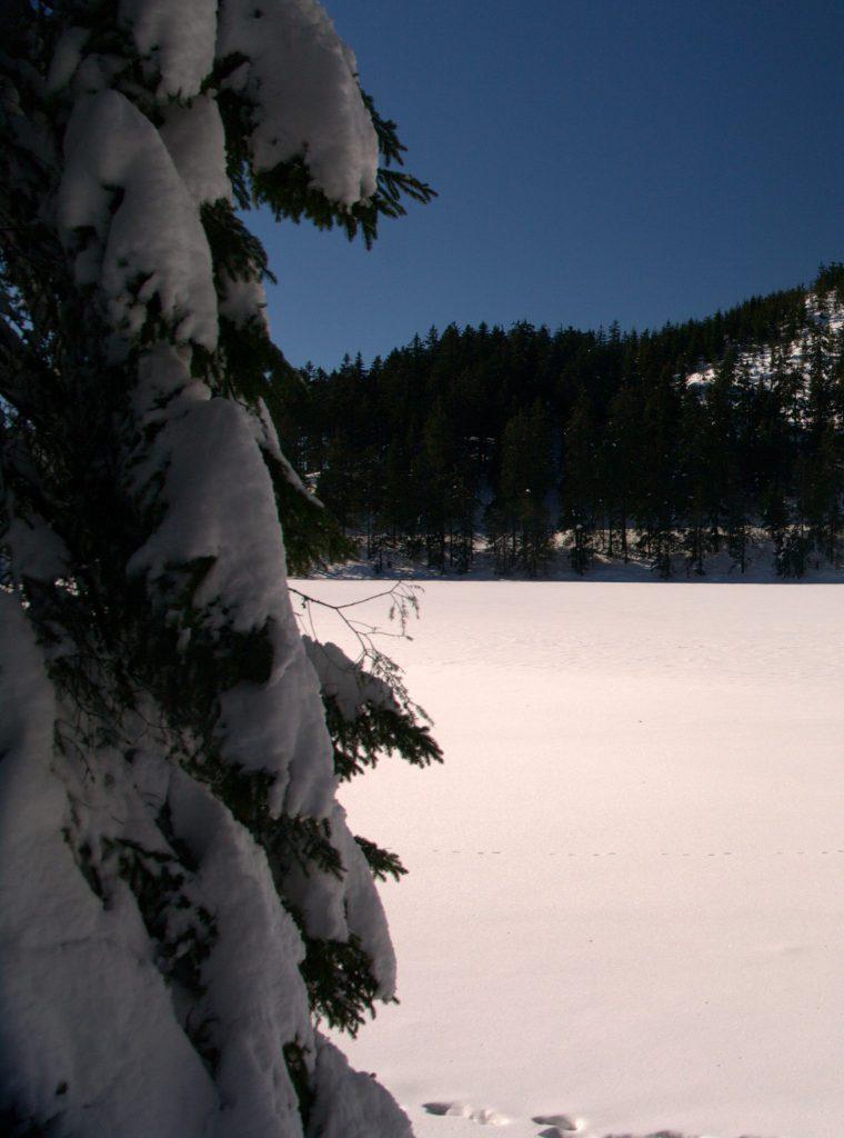 Der zugefrorene Mummelsee
