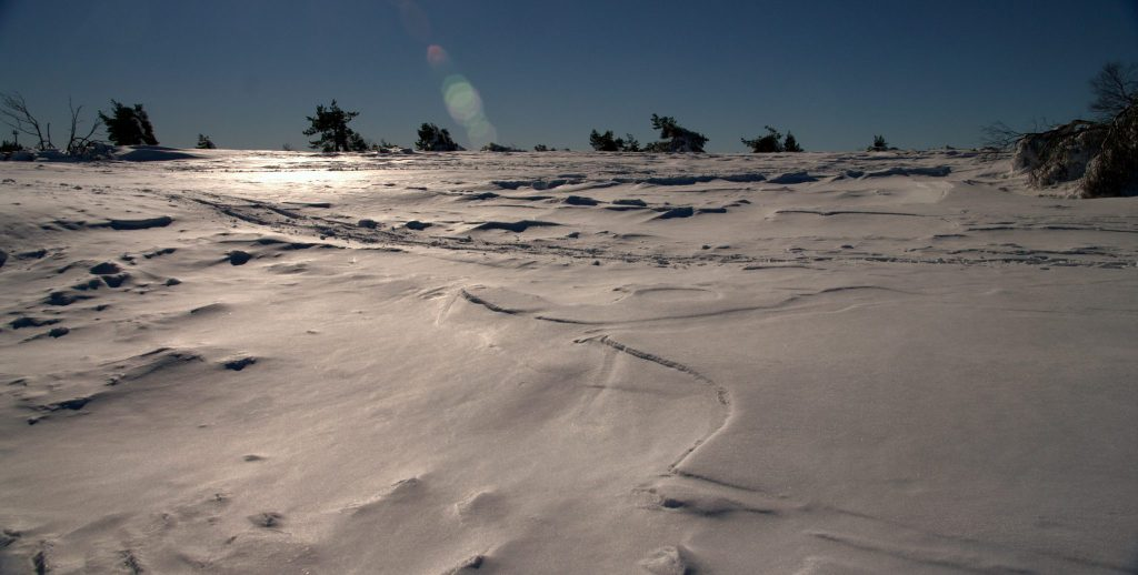 Frostige Hochebene im Gegenlicht - Hornisgrinde - Schwarzwald