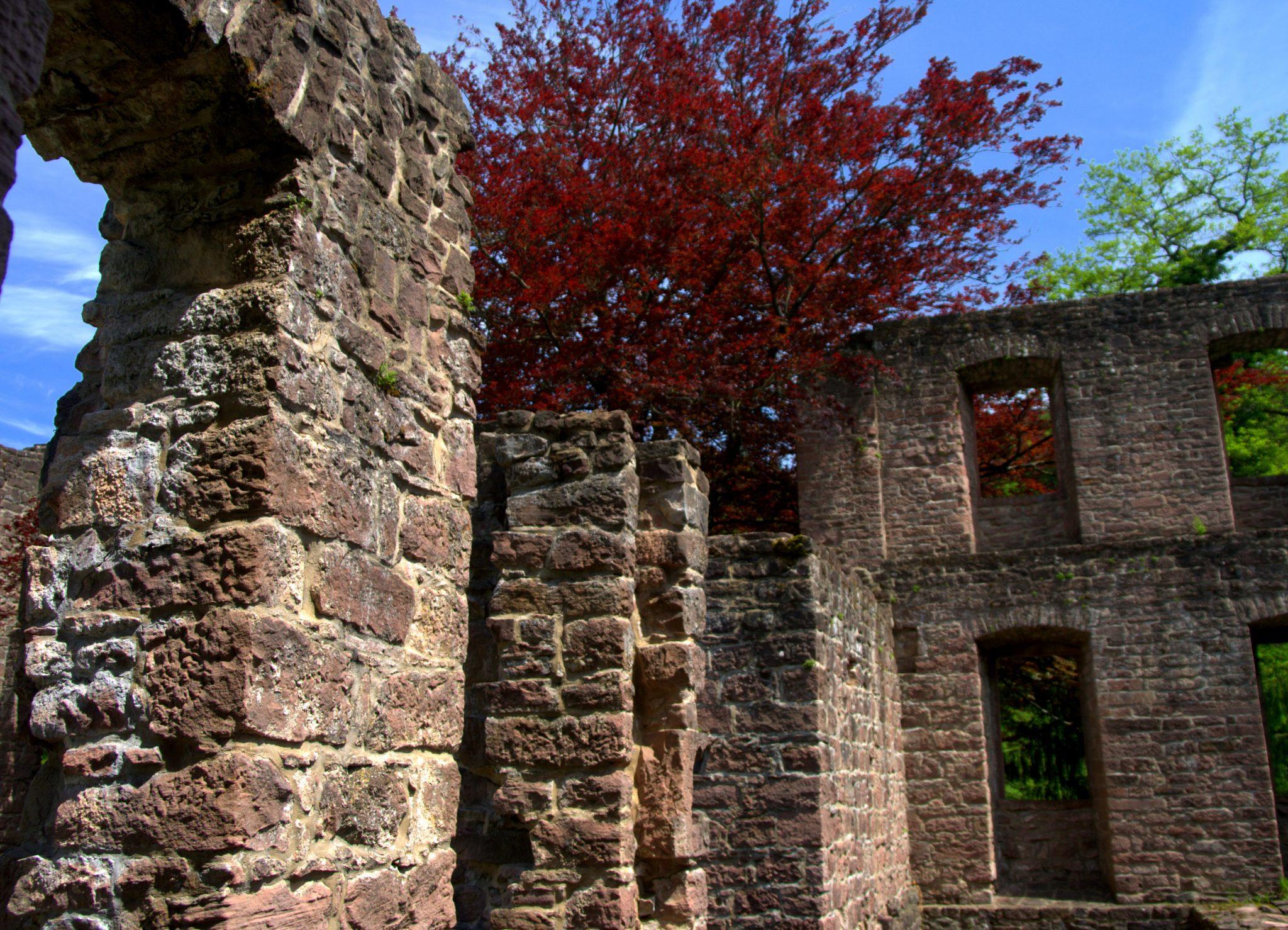 Roter Busch auf Mauerwerk - Frauenalb - Schwarzwald