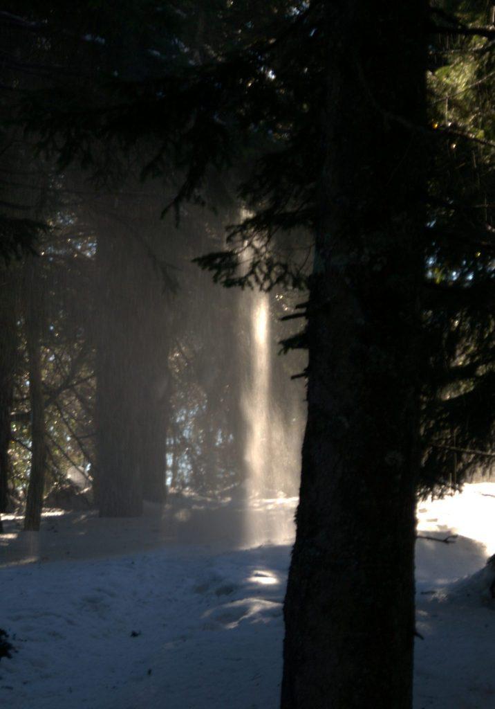 Sonnenstrahl im verschneiten Wald