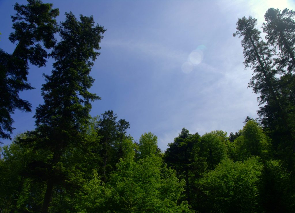 Waldimpression - Frauenalb - Schwarzwald