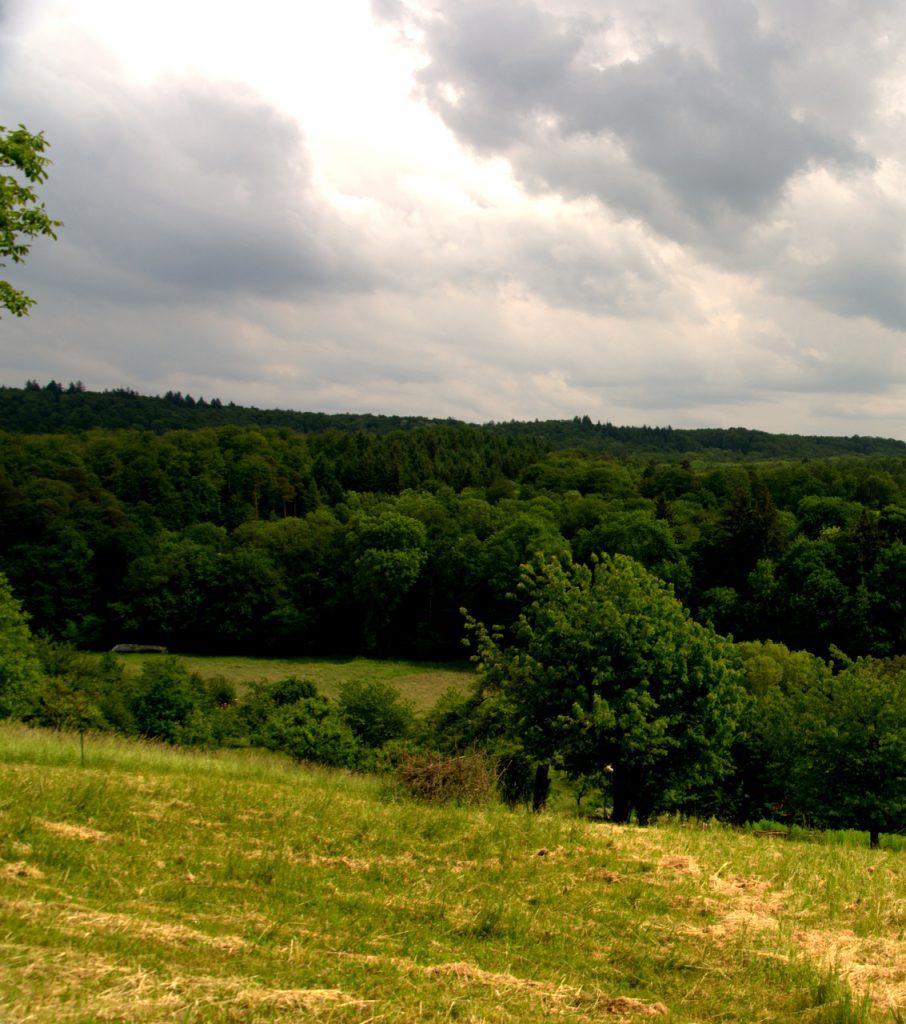 Blick auf das Plateau des Eppinger Hardt's