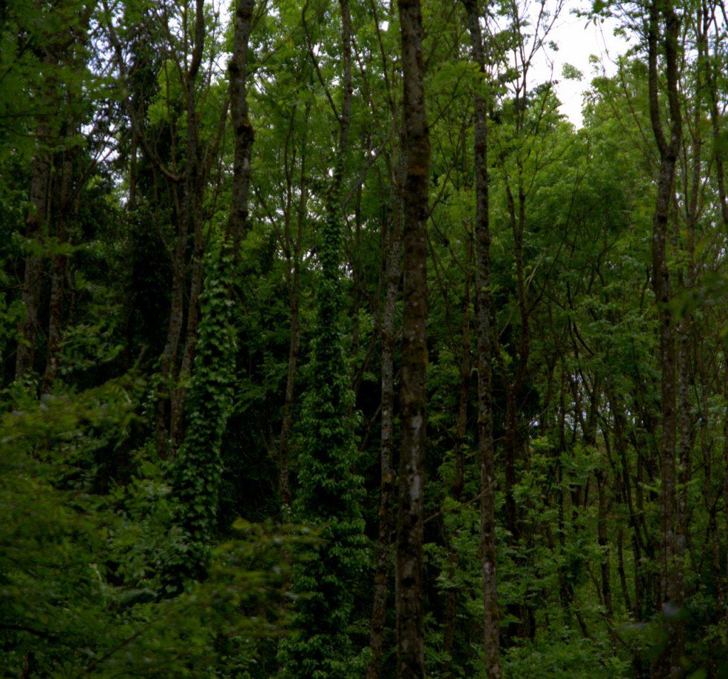 Dschungel im Kraichgau
