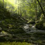 Wasserfall - Geroldsau
