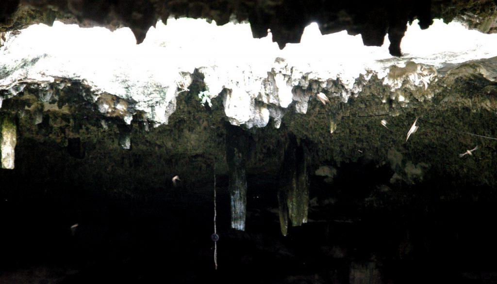 Schwalben unter dem Höhlendach - Cenote Tza Ujun Kat - Homun