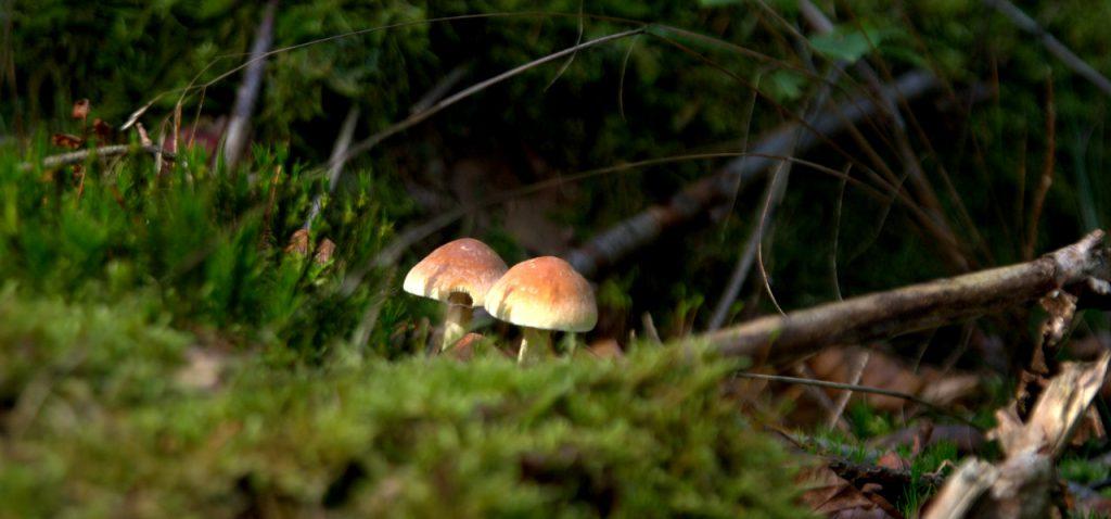 Im Pilzwald 3