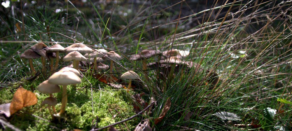 Im Pilzwald 5