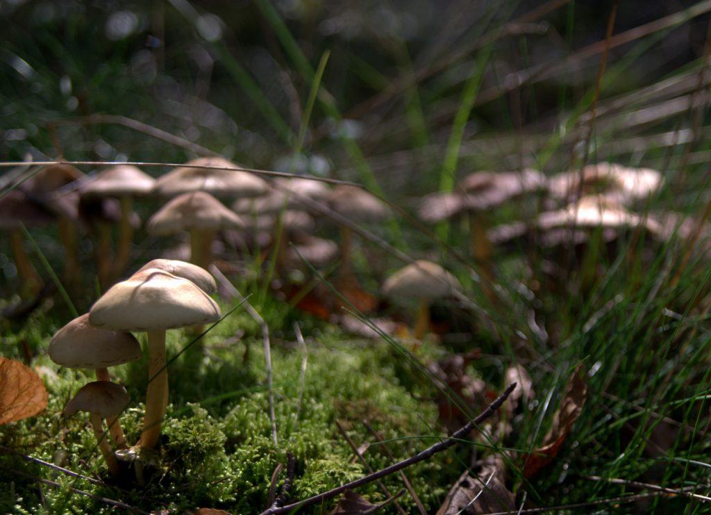 Im Pilzwald 6