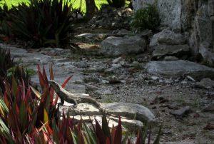 Iguana neben bunten Blättern - Mexiko