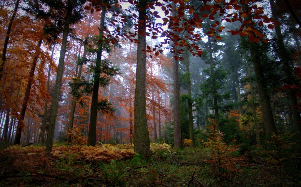 Herbstimpression - 1 - Aufnahme vom Herbstwald - Wald in Farben