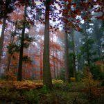 Herbstwald - herbstlich gefärbt  - Albtal - Nordschwarzwald
