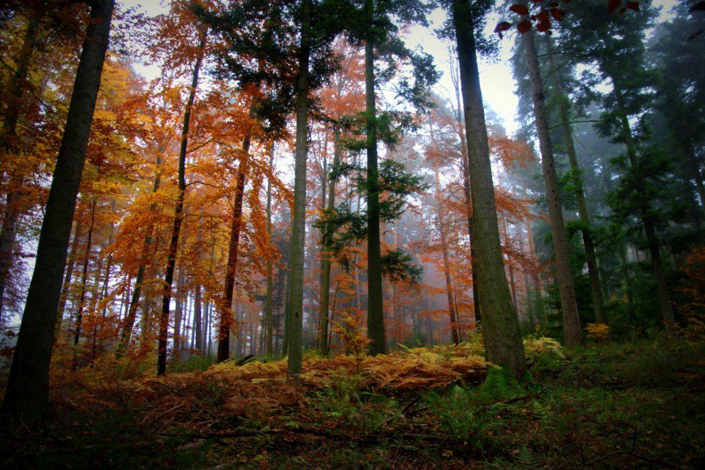 Herbstimpression - 3 - Aufnahme vom Herbstwald - Wald in Farben