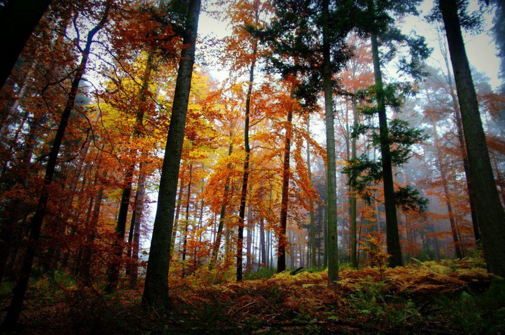 Herbstimpression - 2 - Aufnahme vom Herbstwald - Wald in Farben