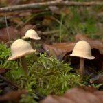 Fischweiher - Albtal - Pilze im November