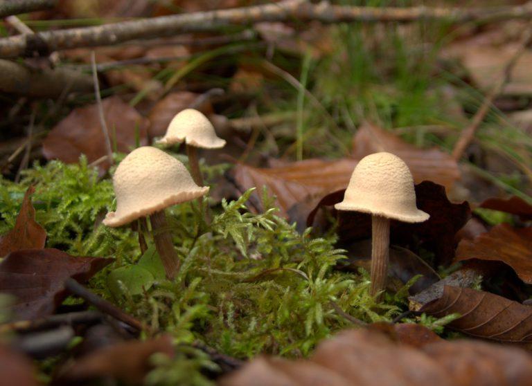 Fischweiher – Albtal – Pilze im November