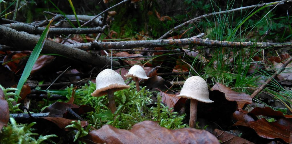 Fischweiher - Albtal - Pilze im Schwarzwald