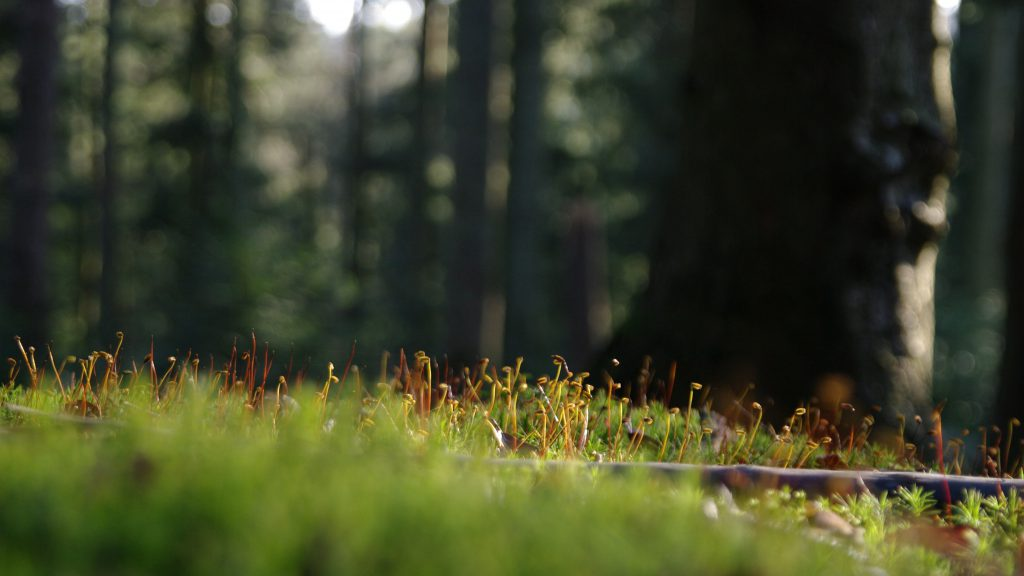 Moos - Nordschwarzwald - 8