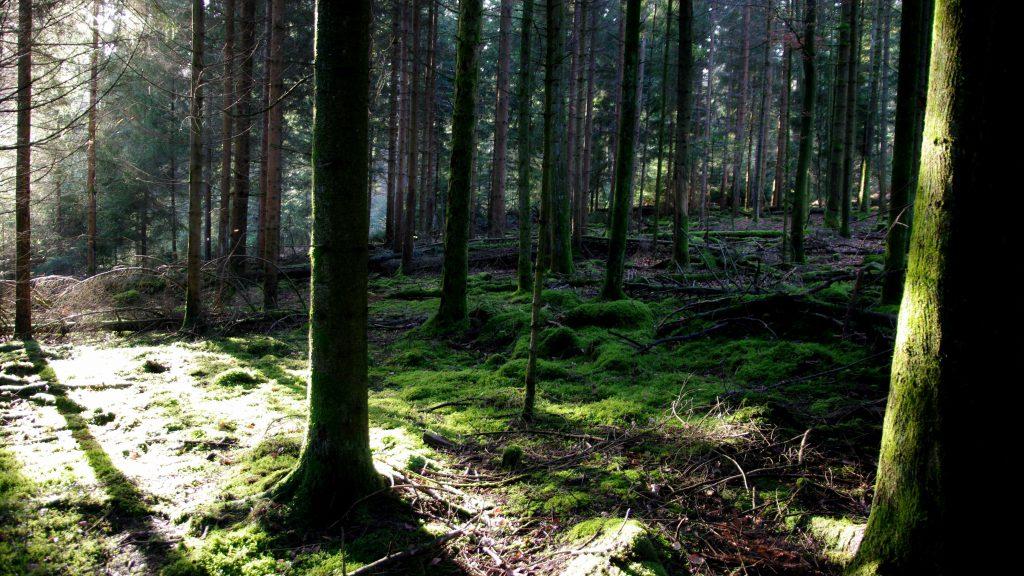 Dobel - Nordschwarzwald - 6