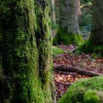Im Mooswald bei Dobel - Nordschwarzwald