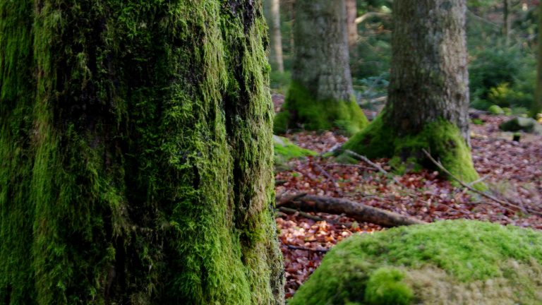 Im Mooswald bei Dobel – Nordschwarzwald