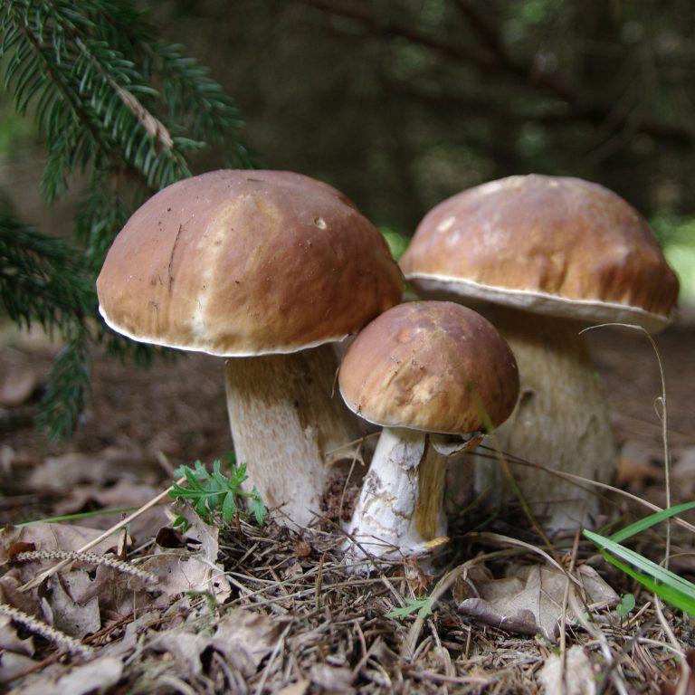 Pfälzer Wald  – im Oktober