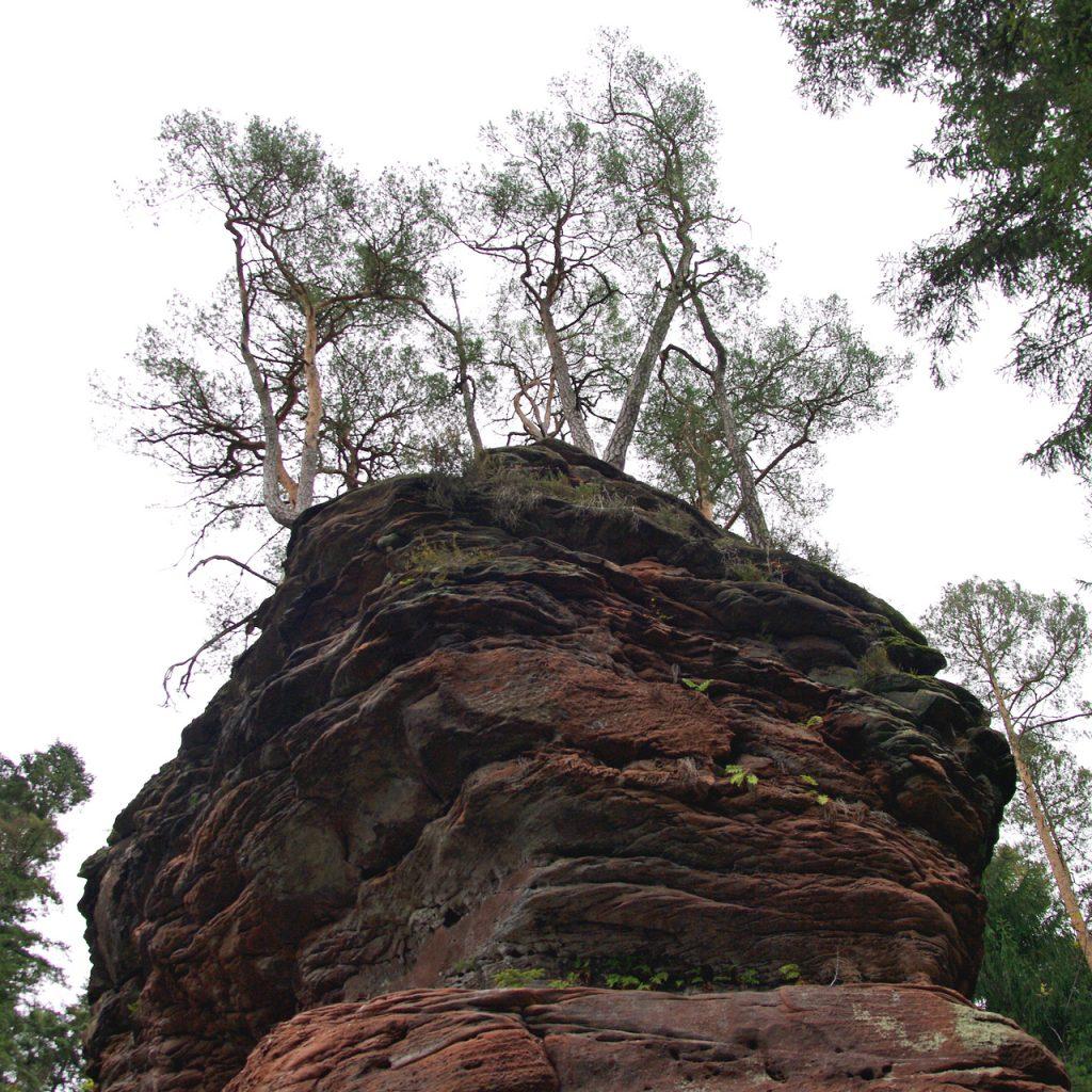 Pfälzer Wald im Oktober - Fels mit Baumbewuchs