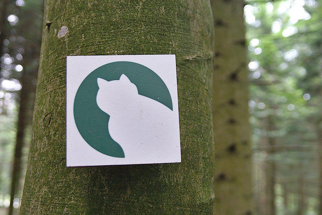 Wildkatze - Weiße Katze vor grünem Kreis.