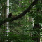 Wildkatzen-Walderlebnis-Pfad - Geistal - Bad-Herrenalb - Nordschwarzwald