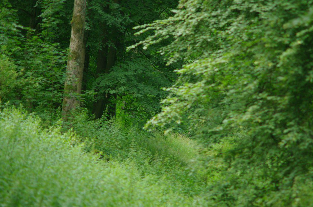 Wald -  VIVITAR TELE-ZOOM 75-260MM 1:4.5