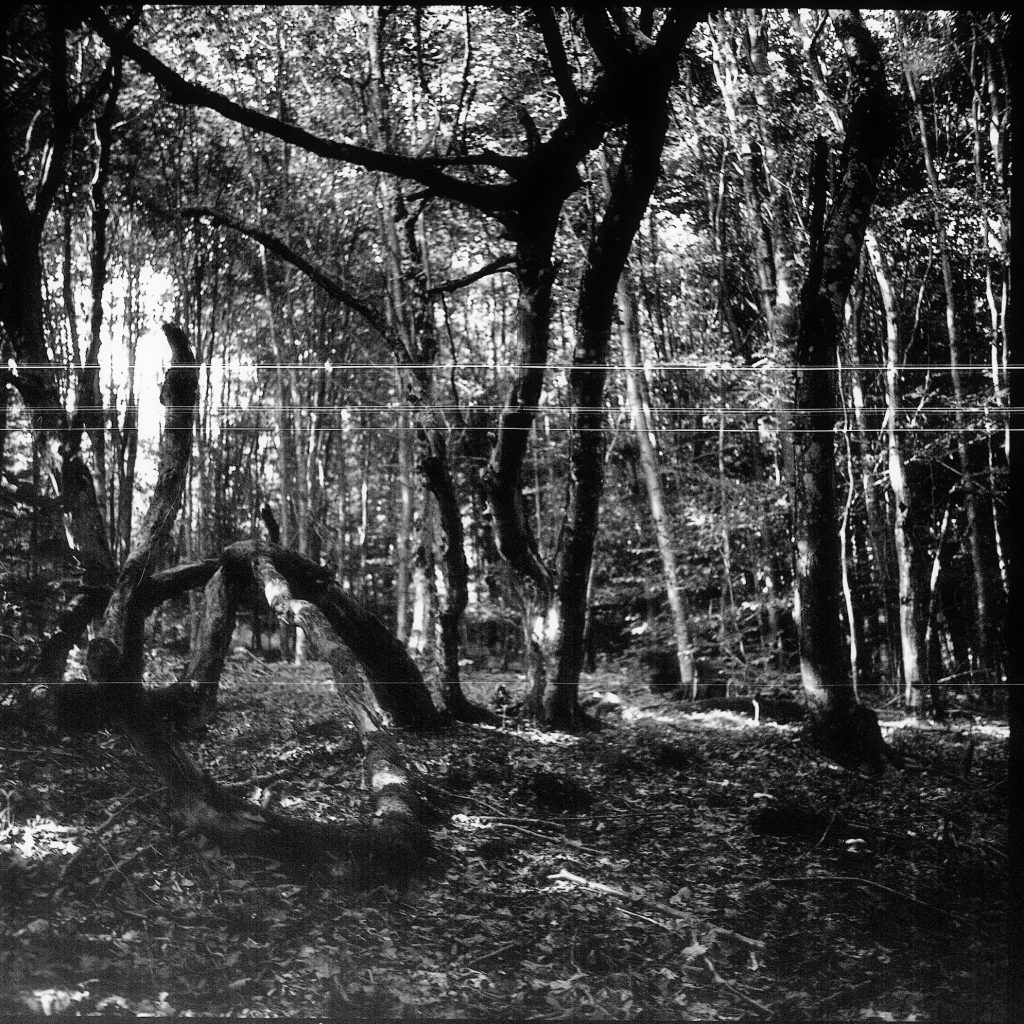 Im Wald - AGFA ISOLY IIA MIT AGFA COLOR AGNAR 1:5.6/55 - FOMAPAN 100