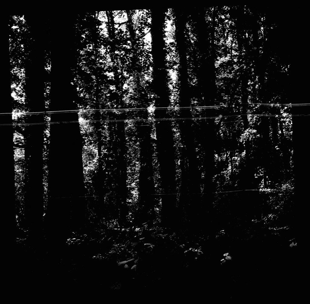 Bäume -  AGFA ISOLY IIA MIT AGFA COLOR AGNAR 1:5.6/55 - FOMAPAN 100