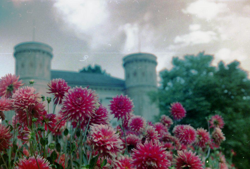Blumen im botanischen Garten in Karlsruhe -Akarette II und Fujicolor Superia 200