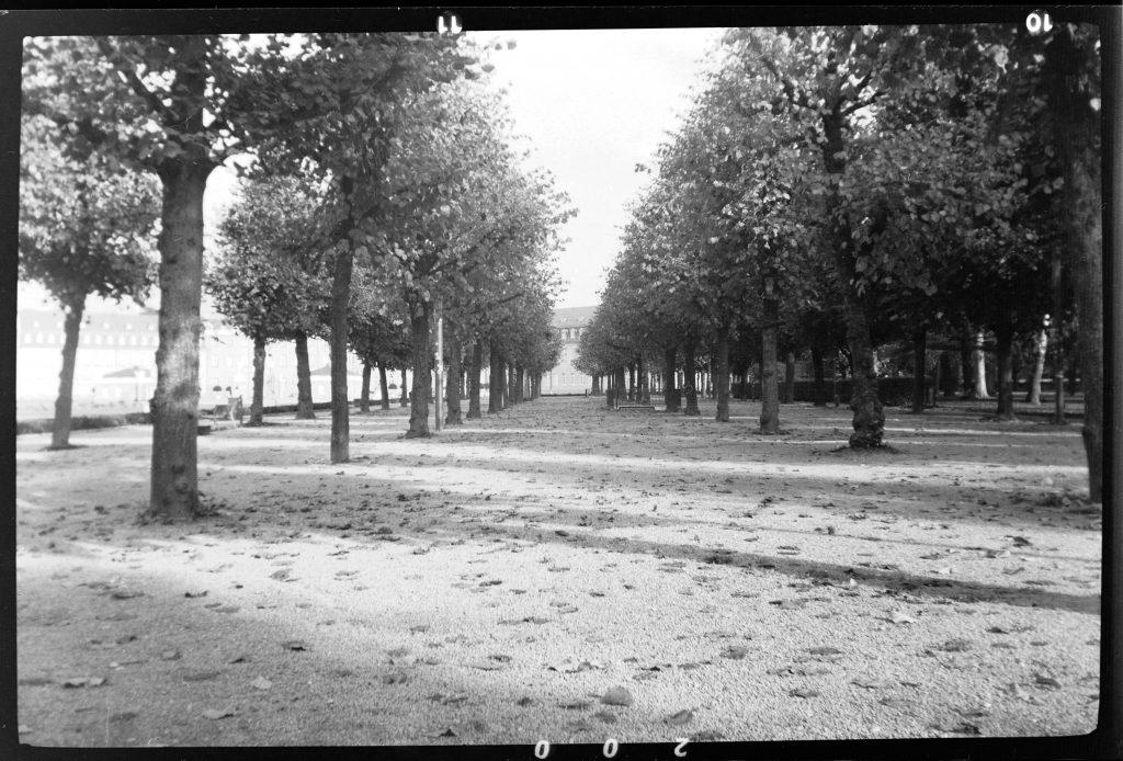 Bäume am Schloßplatz - Agfa Synchro Box 600 - Fomapan 200 - Blende 11