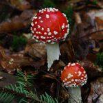 Photowalk im Wald - Fotografieren im Regen