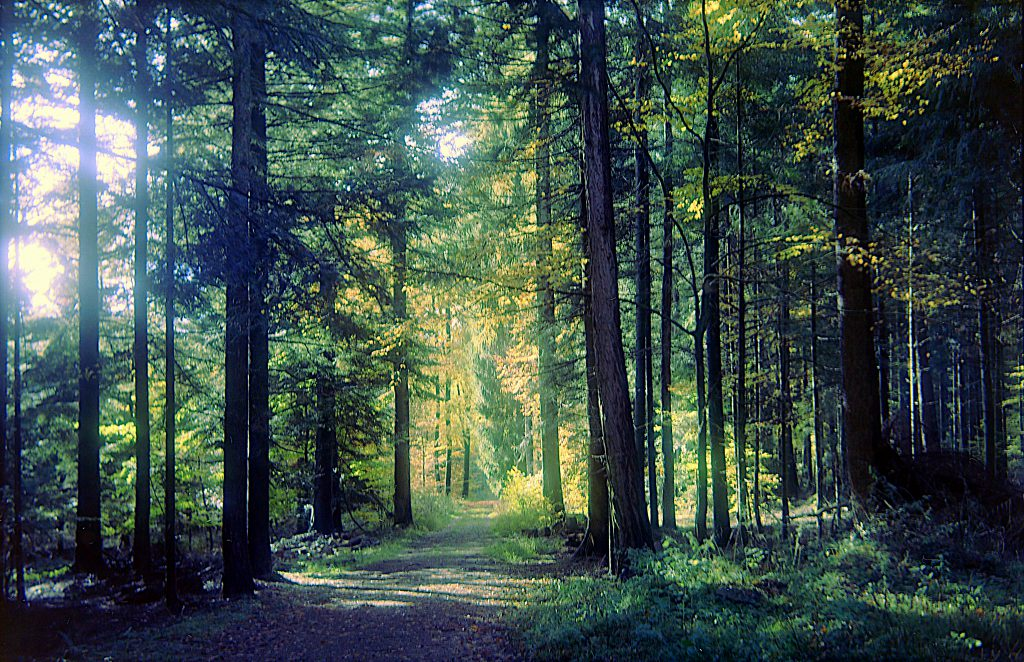 Waldweg im Herbstwald - Zeiss Ikon Ercona mit Kodak Ektar 100
