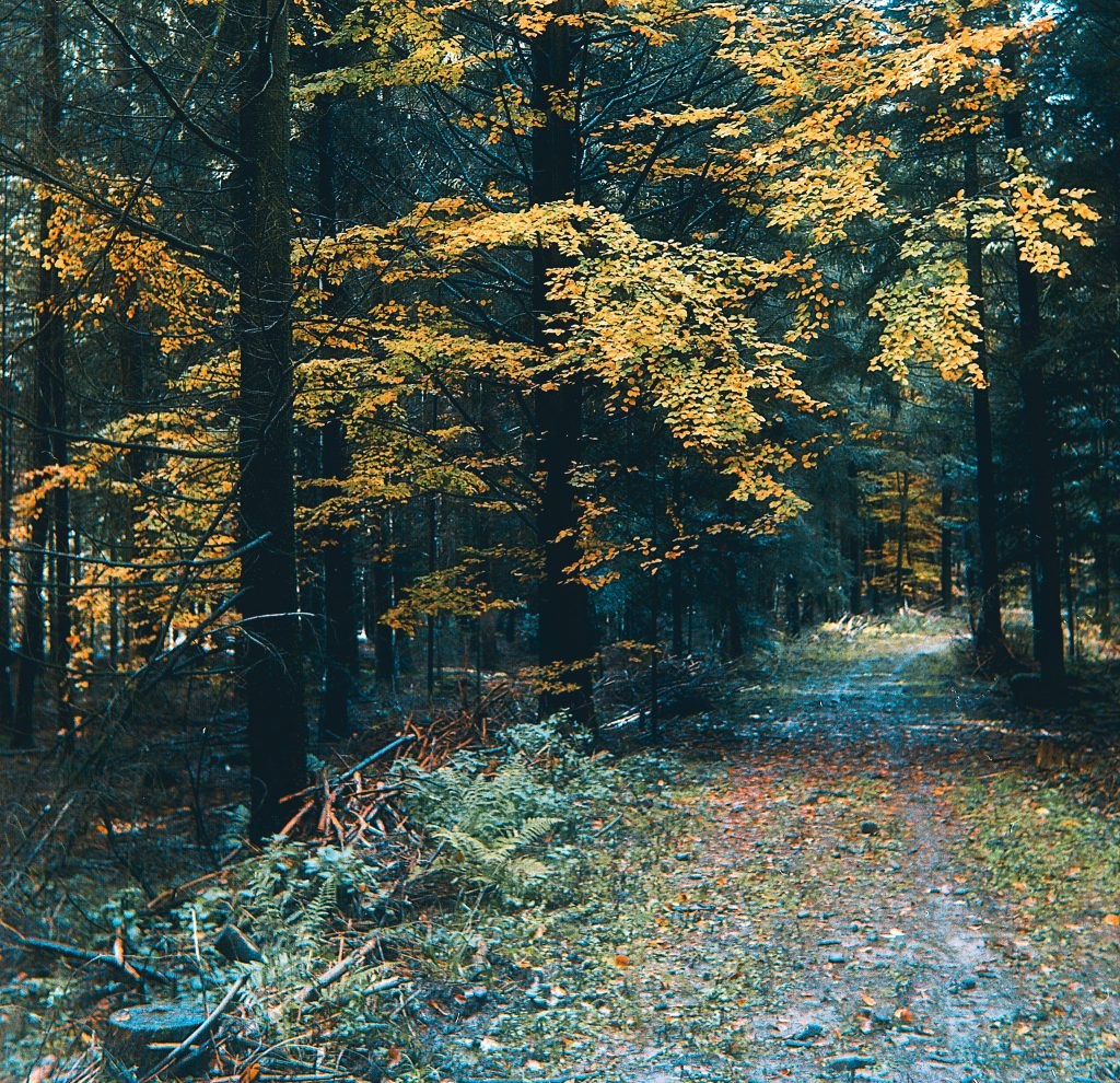 Waldweg nahe Waldbronn - Zeiss Ikon Ercona mit Kodak Ektar 100